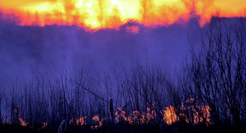 """Голем шумски пожар ја зафати ,,мртвата зона""""  во Чернобил"""