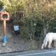 (Видео) Куче во Грција 18 месеци не се трга од местото каде што починал неговиот газда